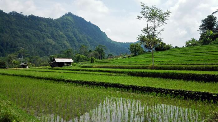 Indonesie (2)